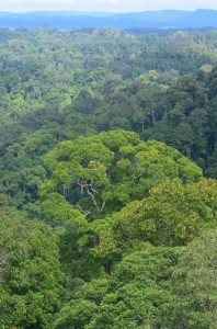 Ulu Temburong NP (photo Kuravova)