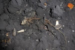 hlodavci jsou dalšími příživníky v důlních chodbách/rodents represent another moocher inside mine