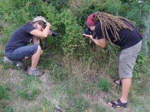 fotografování Ephippiger ephippiger (foto: DM)