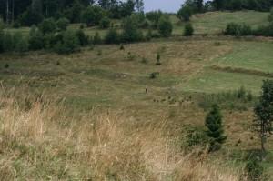 extenzivně využívané pastviny okolo Hriňové (Vrchslatina) (foto: OK)